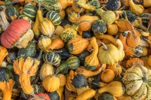 Ensemble de légumes représentant la variété des médecines douces pour la douleur chronique.
